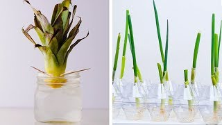 20 Gardening Hacks That Will Blow Your Mind!! Easy DIYs and Life Hacks by Blossom