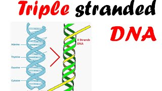 Triple stranded DNA