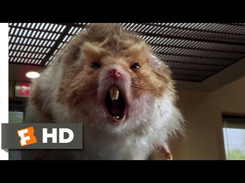 Nutty Professor 2: The Klumps (8/9) Movie CLIP - Giant Hamster Attack (2000) HD - Thời lượng: 2:53.