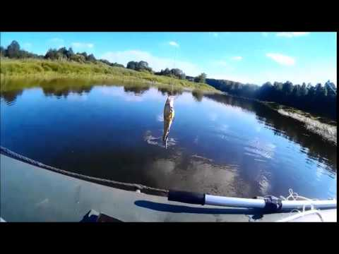 рыбалка на реке желвата