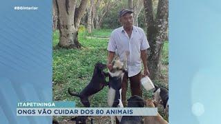 ONGs de Itapetininga cuidam de 80 animais após protetor morrer por complicações da Covid