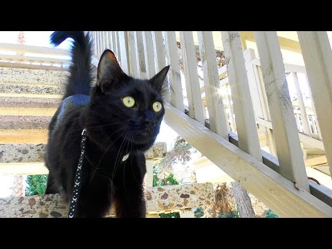 Download Video Top 10 Black Cat Facts