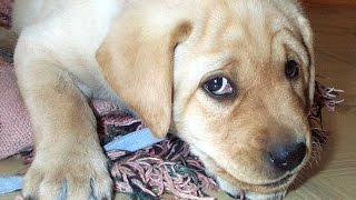 Nonton Guilty Dog Videos - A Funny Guilty Dogs Compilation 2015 Film Subtitle Indonesia Streaming Movie Download