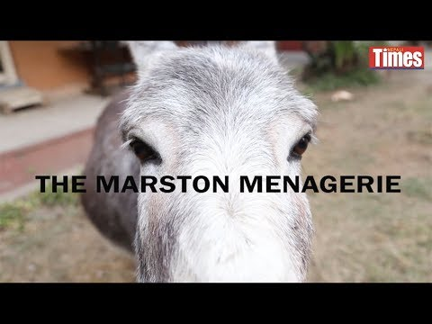 (The Marston Menagerie...2 minutes, 43 seconds.)