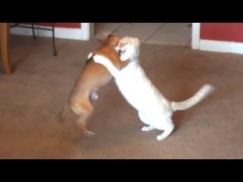incontro-di-wrestling-cane-vs-gatto-176