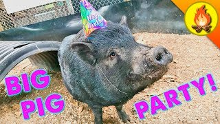 BIG PIG PARTY! by Brave Wilderness