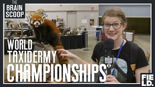 I waited 4+ years for this: the World Taxidermy Championships! by The Brain Scoop