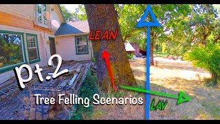 Video Tree Felling Scenarios Pt.2 MP3, 3GP, MP4, WEBM, AVI, FLV Agustus 2019