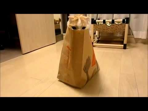 VIDEO: Kočka si hraje na schovávanou v tašce z rychlého občerstvení