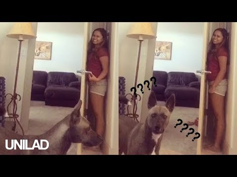 Dog is the Worst at Playing Hide and Seek