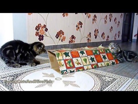 aspettando-natale-gatti-che-giocano