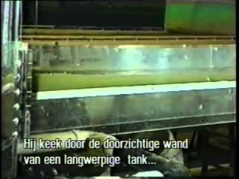 Drama in the Rocks (with Dutch subtitles)