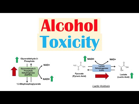Toxic Effects of Ethanol on Liver Metabolism | Alcohol Toxicity | Metabolic Consequences