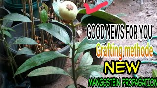 Video MANGGIS CEPAT BUAH/MANGGIS TREE FAST FRUIT/SUB INGLISH MP3, 3GP, MP4, WEBM, AVI, FLV Oktober 2018