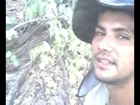 Bushcraft na caatinga parte 7 em pio ix piaui