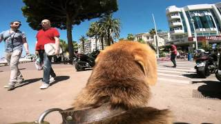 The Dogs Of White God Clip - Cannes 2014