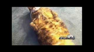 Pet Connection Extra - Diabetes in Pets