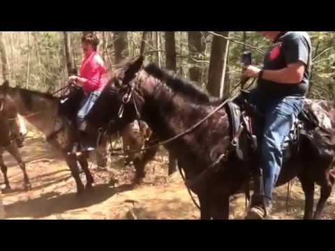 Appalachian Trail Apr 14, 2017 Out of the Smokey Mountains