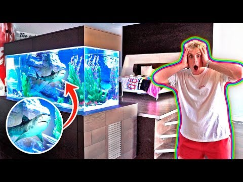 MY NEW BEDROOM SHARK TANK!! **500 GALLONS**_Aquarium. Best of all time