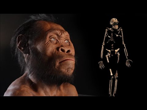 Introducing Homo Naledi; Our Newest Relative