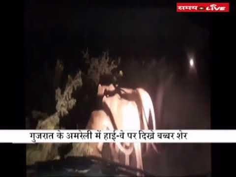Video: 11 lions seen on the highway in Gujarat