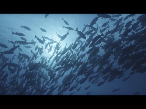 Поверхность океана: 10 часов отдыха океанских пейзажей / BBC Earth