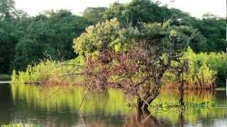 pantanal-de-pocone