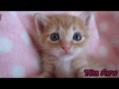 Cutest Kitten In The World! This will melt your heart