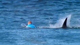 Акула против серфингиста