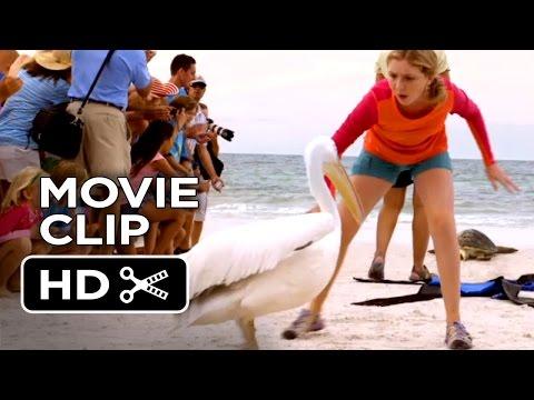 Dolphin Tale 2 Movie CLIP - Shoo Rufus (2014) - Morgan Freeman Dolphin Drama HD