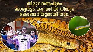 Wow! Vava suresh rescues Bronzeback Tree Snake from Trivandrum Karyavattom Campus | Snake Master