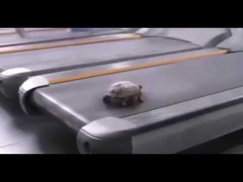 Rùa - Ai bảo tao chạy chậm đâu?