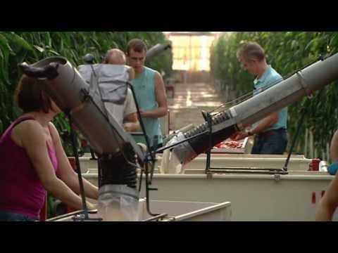 L1 Koplopers- BioVerbeek Velden