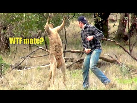 Ozzy Man Reviews Man vs Roo