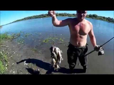 рыбалка окунь отводной видео