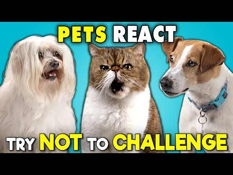 Pets React To The Try Not To Ultimate Challenge (Laugh, Move, Eat)
