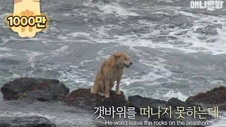 Video Why this stray dog stays on the rocky shore despite the crashing waves.. MP3, 3GP, MP4, WEBM, AVI, FLV November 2018