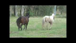 Video Horses Meet For The First Time MP3, 3GP, MP4, WEBM, AVI, FLV Juli 2018