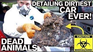 Video BIOHAZARD Detailing Dirtiest Car Ever! First Wash in 10 Years MP3, 3GP, MP4, WEBM, AVI, FLV Agustus 2019