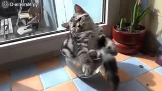 У кота выходной
