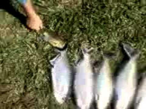pescaria  matrinchã e jatuarana em santa carmem