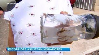 Garça: escorpiões assustam moradores