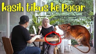 Video KAGET !! KASIH TIKUS KE FATIMAH MP3, 3GP, MP4, WEBM, AVI, FLV Juni 2019