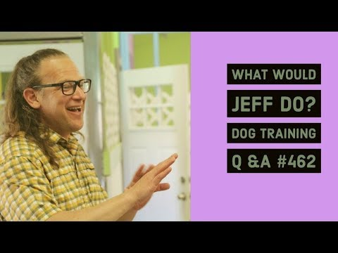 Training a fearful dog | Using a Bark Collar | What Would Jeff Do? Dog Training Q & A #462