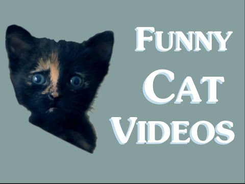 Funny Cat Videos (Clean) New 2014 – Funny clean cat video cats for kids – funny cats
