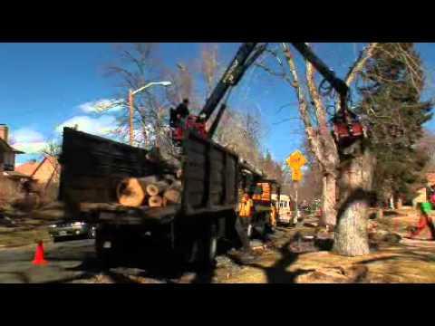 video:Denver Tree Care