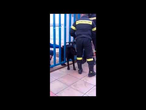 Πυροσβέστες σώζουν σκύλο στα Χανιά