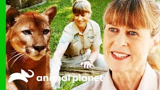 Terri Irwin's Best Moments From Season 2!   Crikey! It's The Irwins by Animal Planet