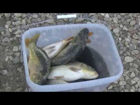 Видео отчет о рыбалке за 11 августа 2018