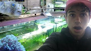 HUGE FISH STORE TOUR!! by  Challenge the Wild